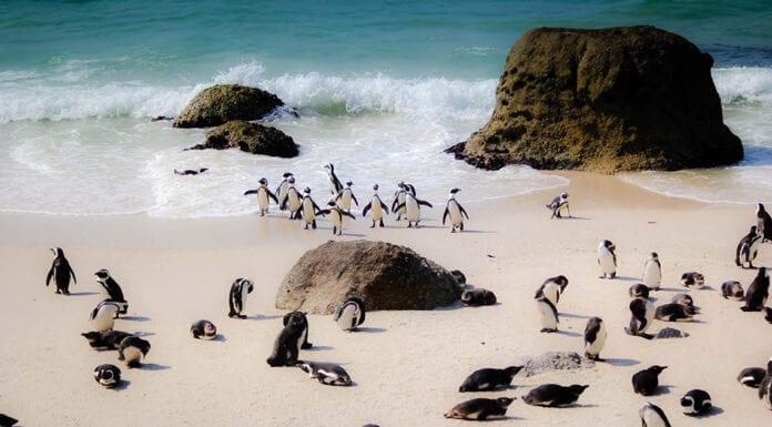 activiteiten in Zuid-Afrika
