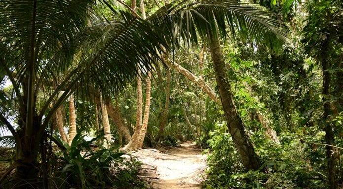 waarom naar costa rica