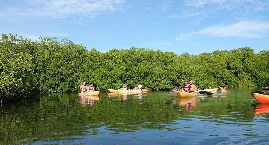Kanoen in de mangrove op Bonaire