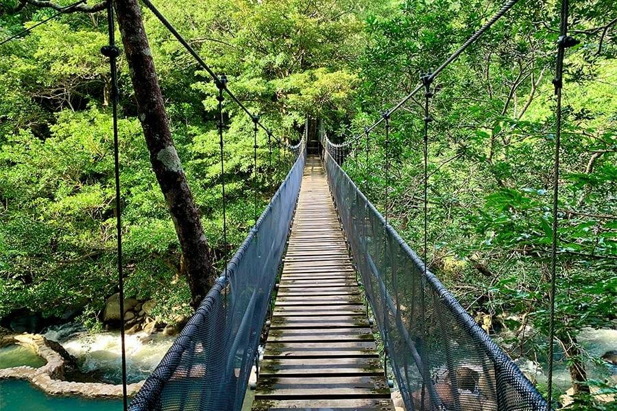 Hike tussen de boomtoppen in Costa Rica.
