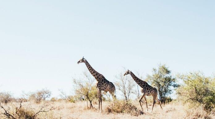 reis naar zuid-afrika tips