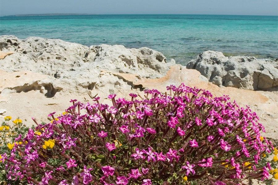 Bloemen Formentera
