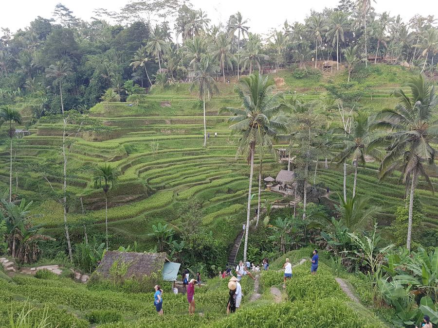 Bezoek de Tegalalang rijstterrassen als je 5 dagen in Ubud bent