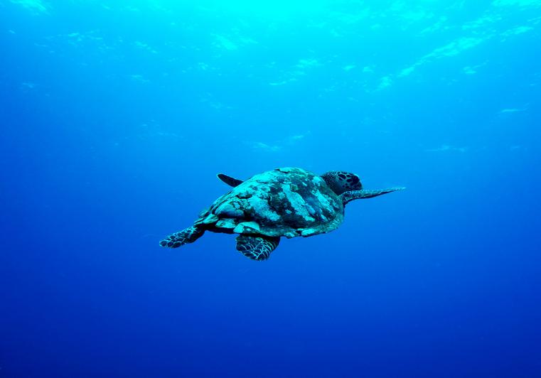 Schildpad bij Gili Air