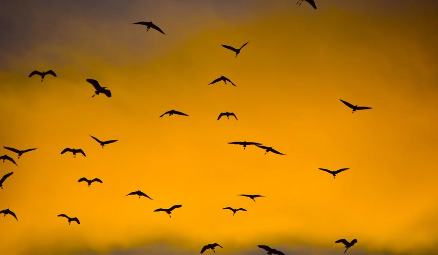 Dieren op Bali: veel vogels bij Ubud in de schemering