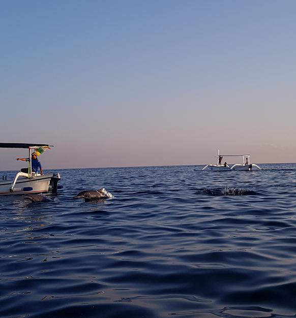 Op zee dolfijnen spotten bij Lovina op Noord-Bali