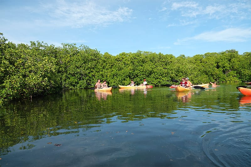 mangrovebossen bonaire