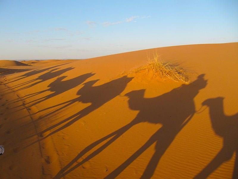 Schaduwen van de dromedarissen op het zand