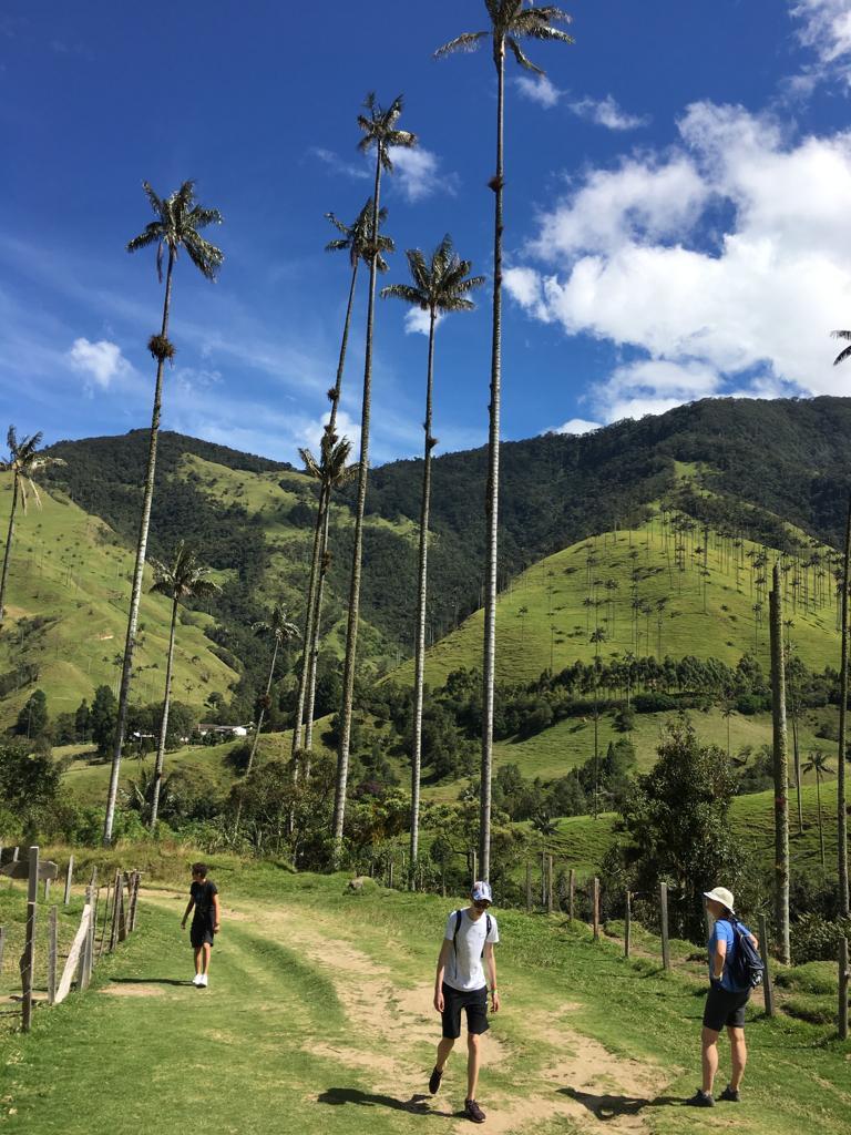 De lange palbomen van de Cocora vallei