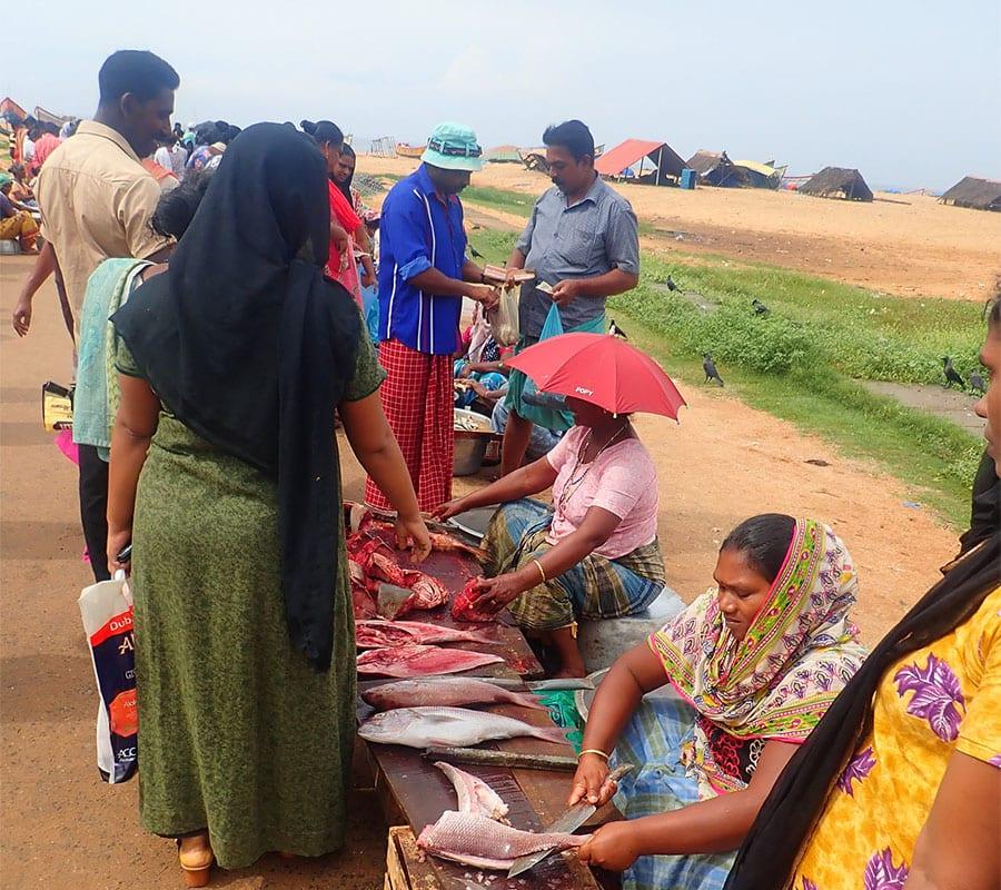 Fietsen door Zuid-India, bezoek aan een lokaal vismarktje