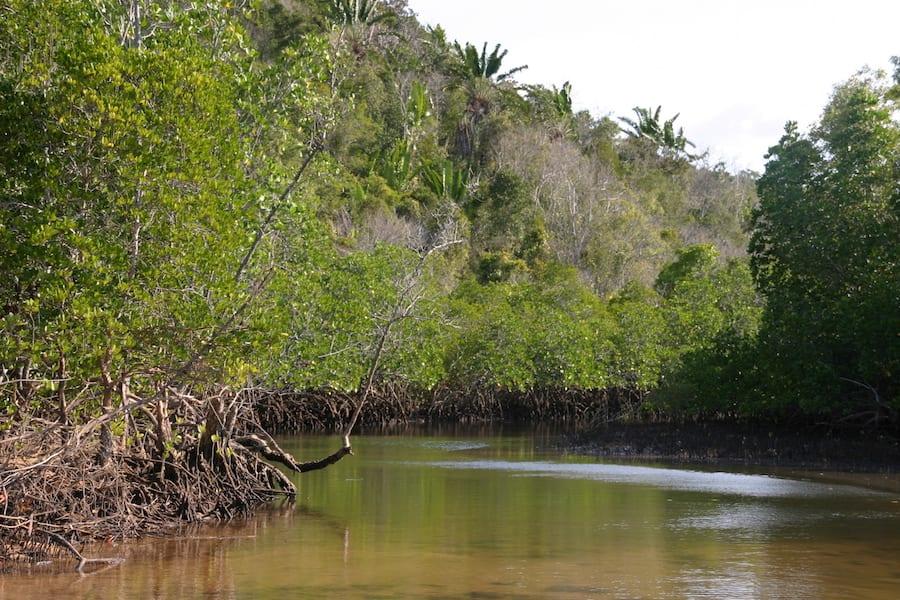Mangrove in Madagaskar