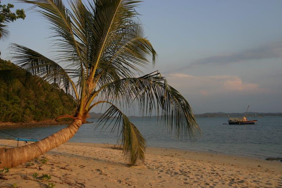 Madagaskar eiland met palmboom