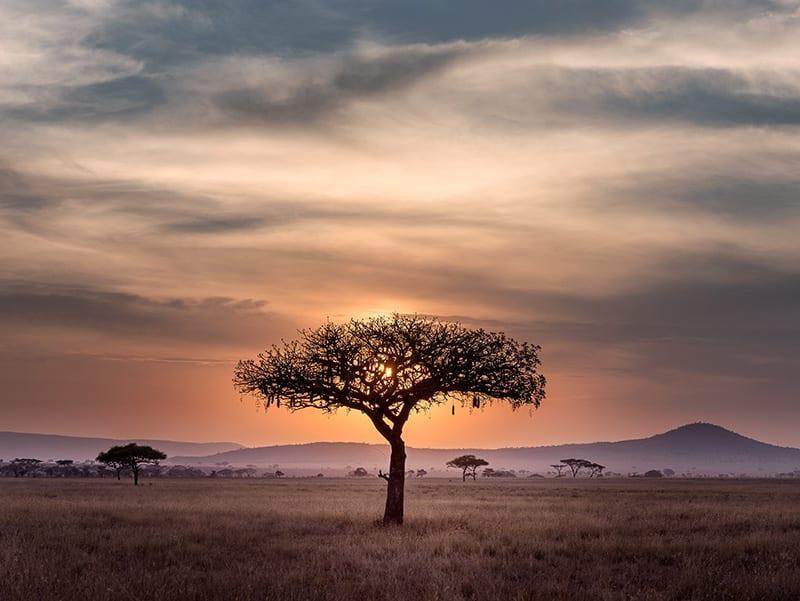 boom en zonsondergang zuid afrika
