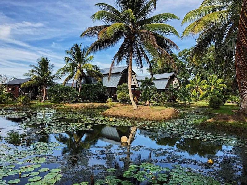Rivier en palmbomen in Suriname