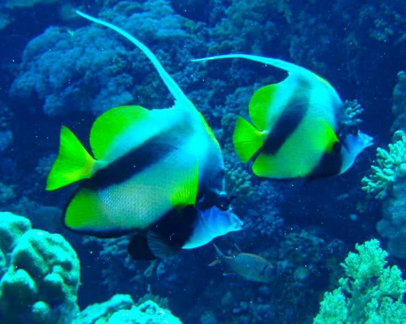 Snorkelen en vissen spotten bij de Tuamotu archipel