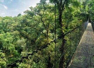 hangbrug in suriname