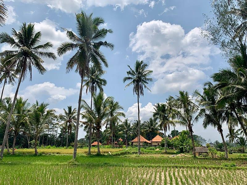 Bali velden