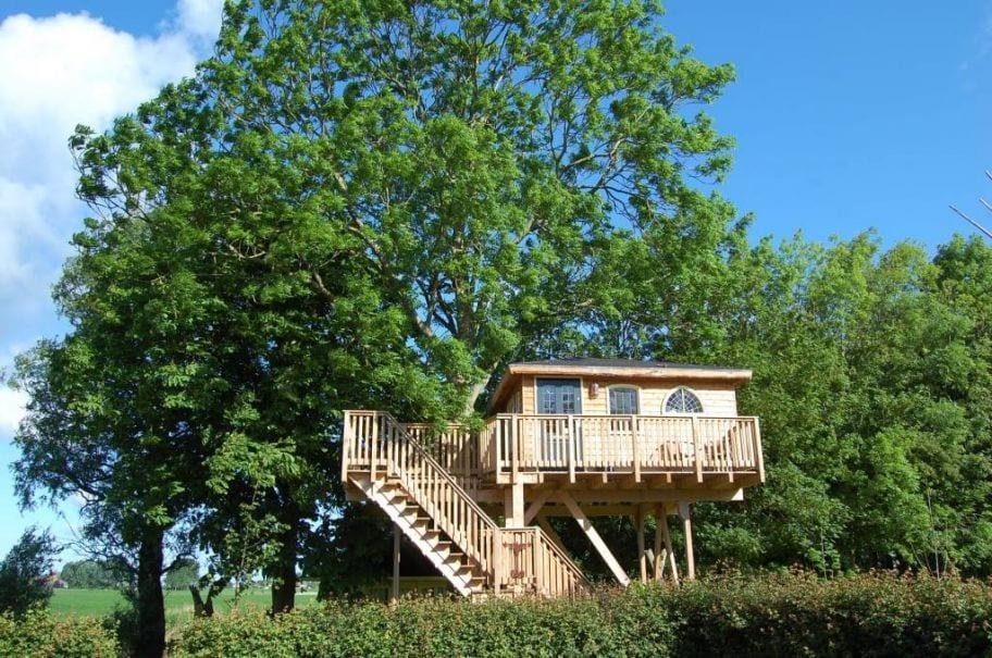 Vier vakantie in Nederland in een boomhut
