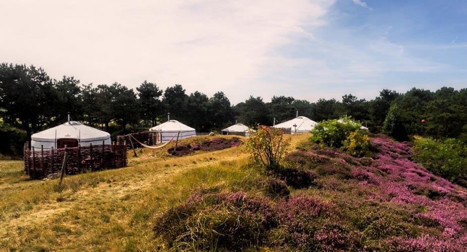 texel yurt glamping in Nederland