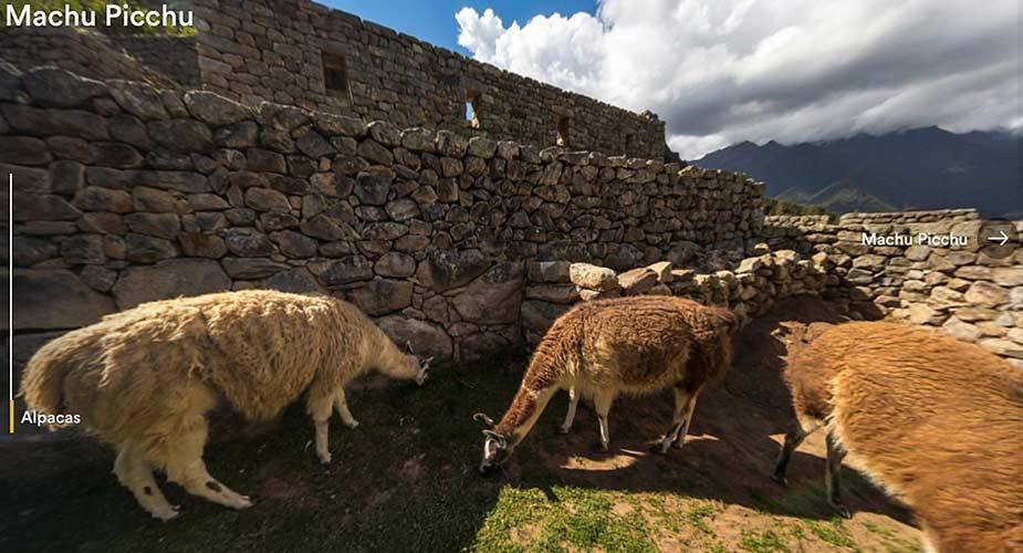 Bezienswaardigheden van Peru: Alpacas bij Machu Picchu in Peru