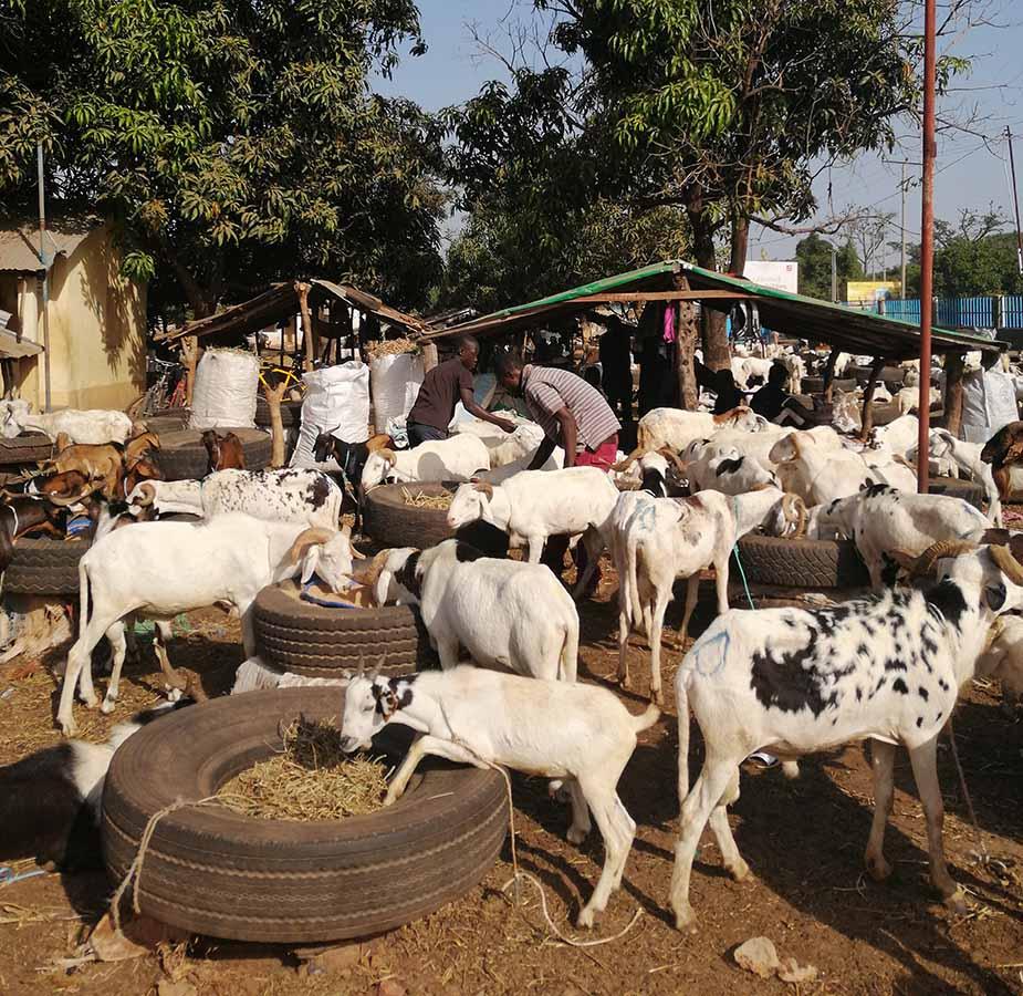 een veemarkt in Gambia