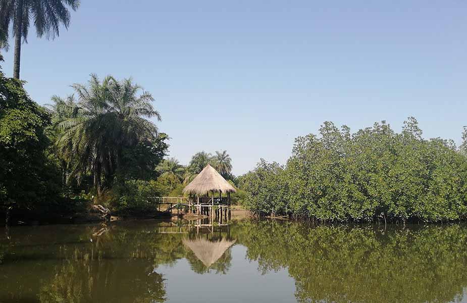 de mangrove in Gambia