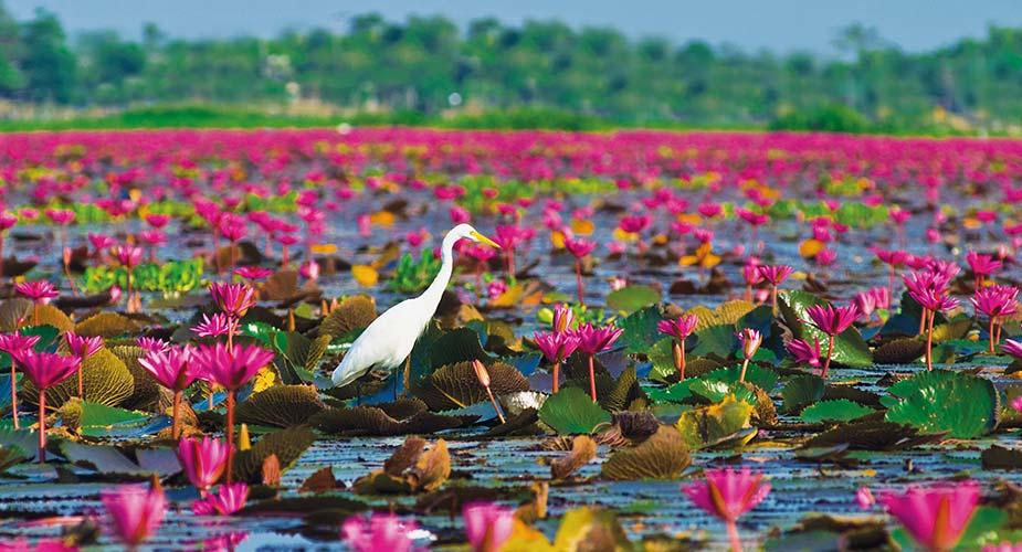 Waterlelies en watervogels in Thale Noi bij Phattalung