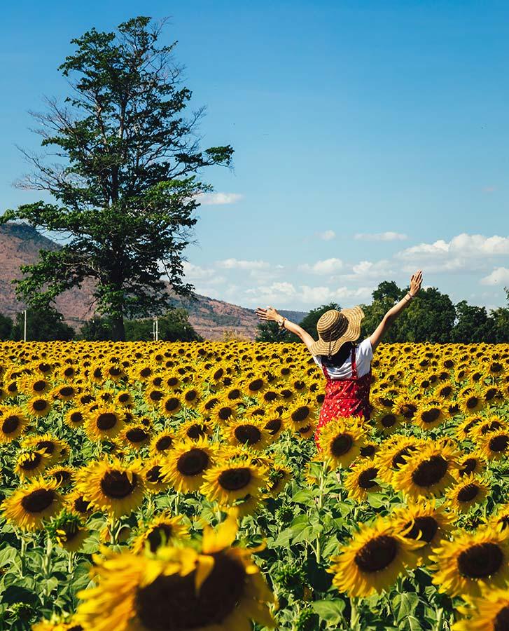 Leuk om te zien tijdens je reis naar Thailand, de zonnebloemenvelden bij Jeenla Mountain
