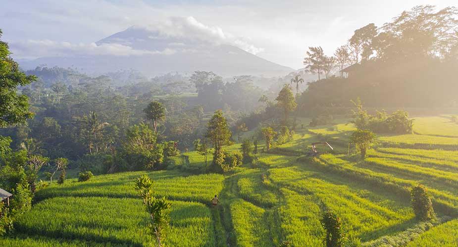 Tip voor Bali, bezoek rijstvelden als deze