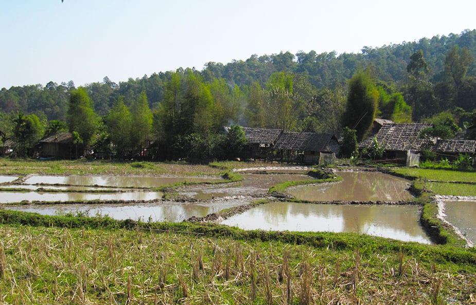 Rijstvelden onderweg van Bangkok naar Chiang Mai