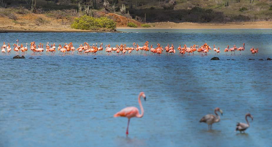 flamingos curaçao