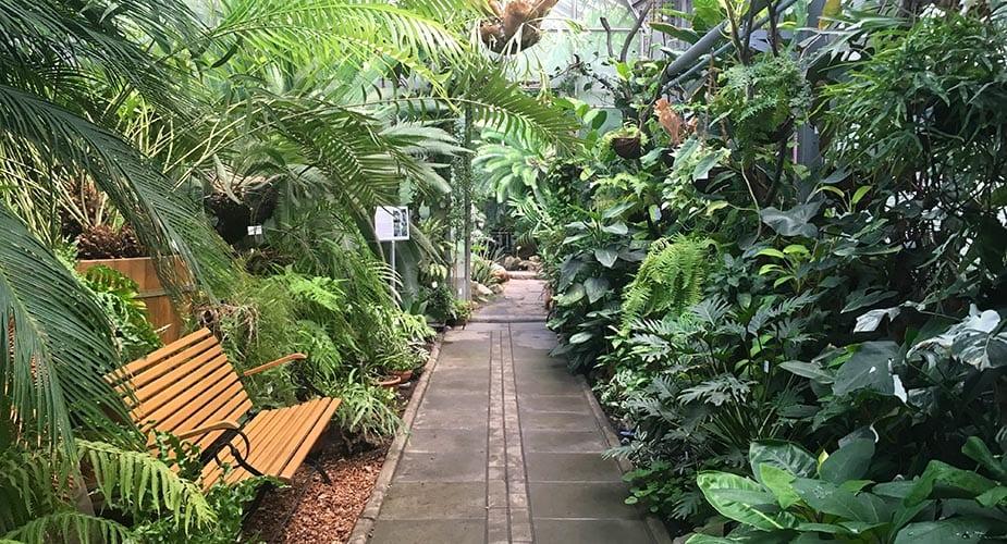 botanische tuin tips krakau