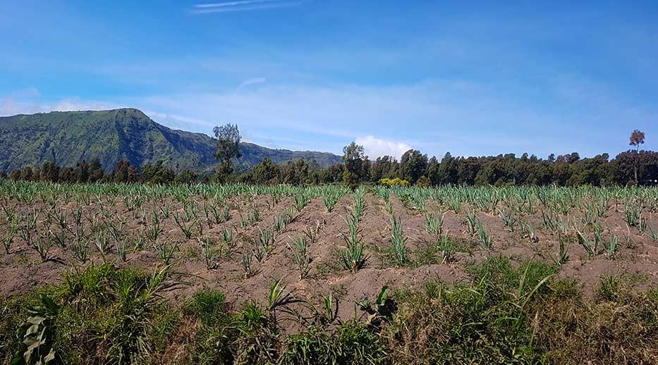 Zicht op de rijstvelden als we onderweg zijn