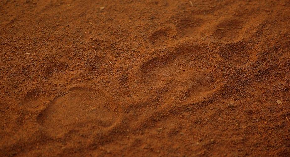 De afdruk van een tijgerpoot in het zand
