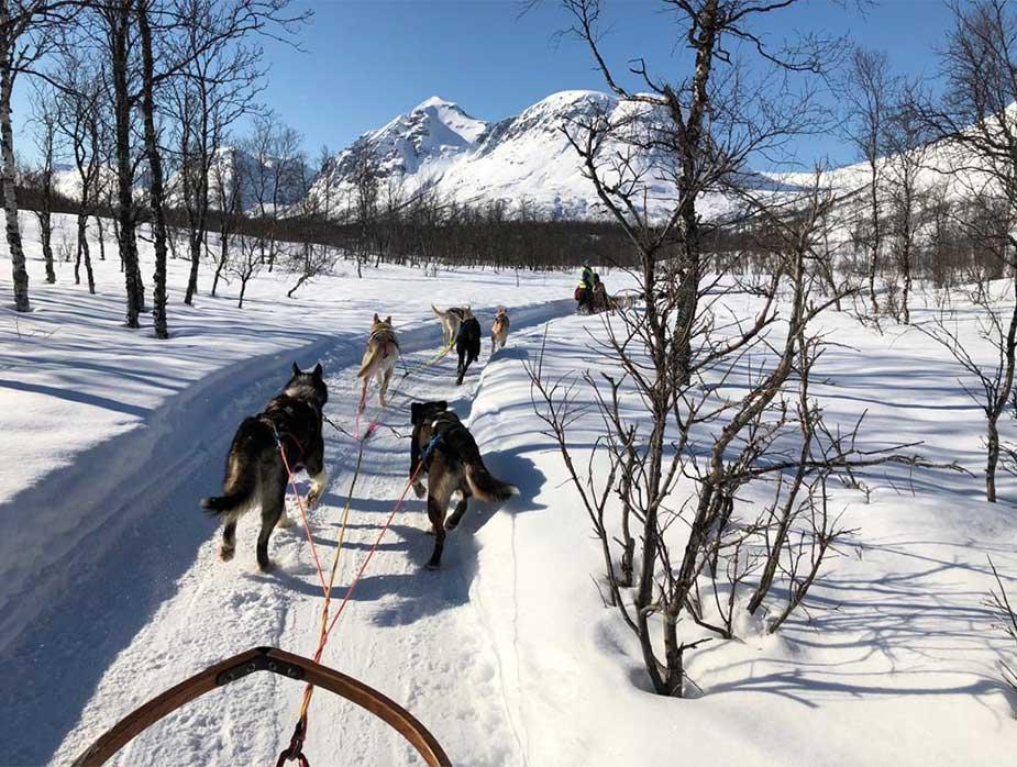 Genieten van een huskysafari in het winterse landschap in Noorwegen