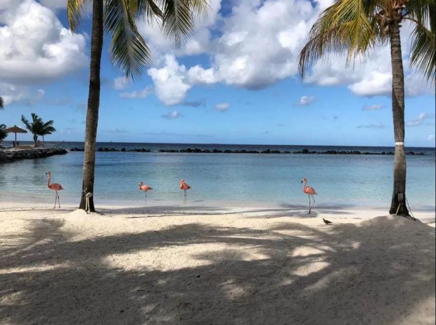 Flamingo op prive eiland Renaissance Aruba