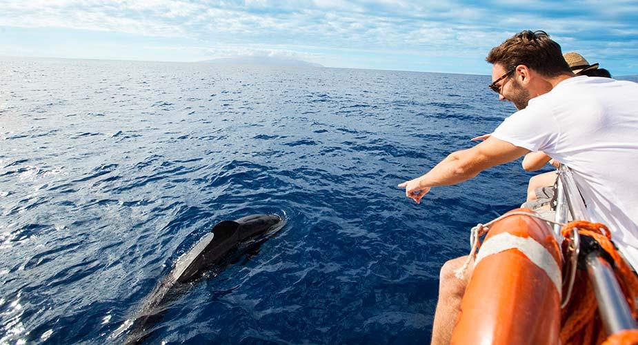 Dolfijnen spotten bij Tenerife