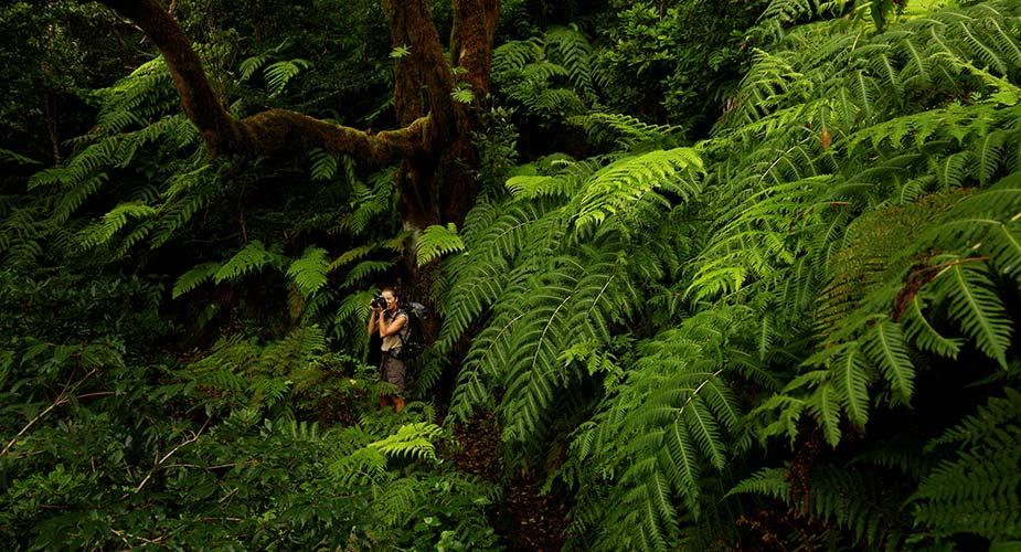 Bos vol met varens in de natuur op Tenerife