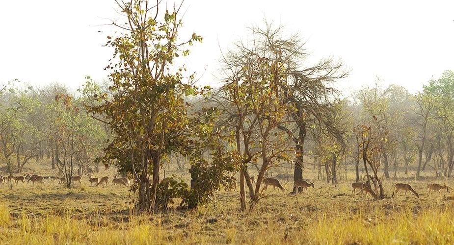 Kudde axisherten op de vlakte in het park