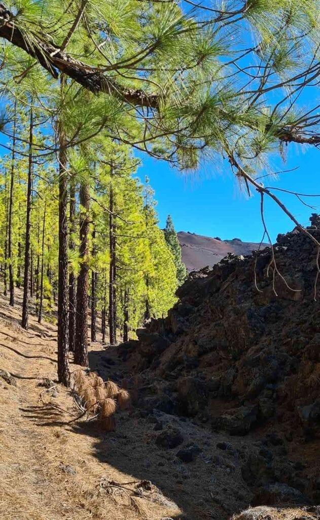 De grens tussen begroeiing en lava bij El Teide