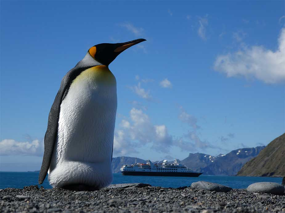 Pinguin op strand in South Georgia