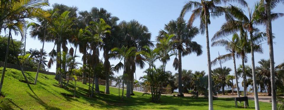 De palmbomentuin in Santa Cruz