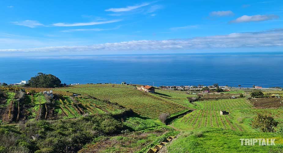 Wijngaan in het noorden van Tenerife