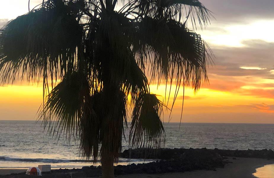 Palmboom bij strand