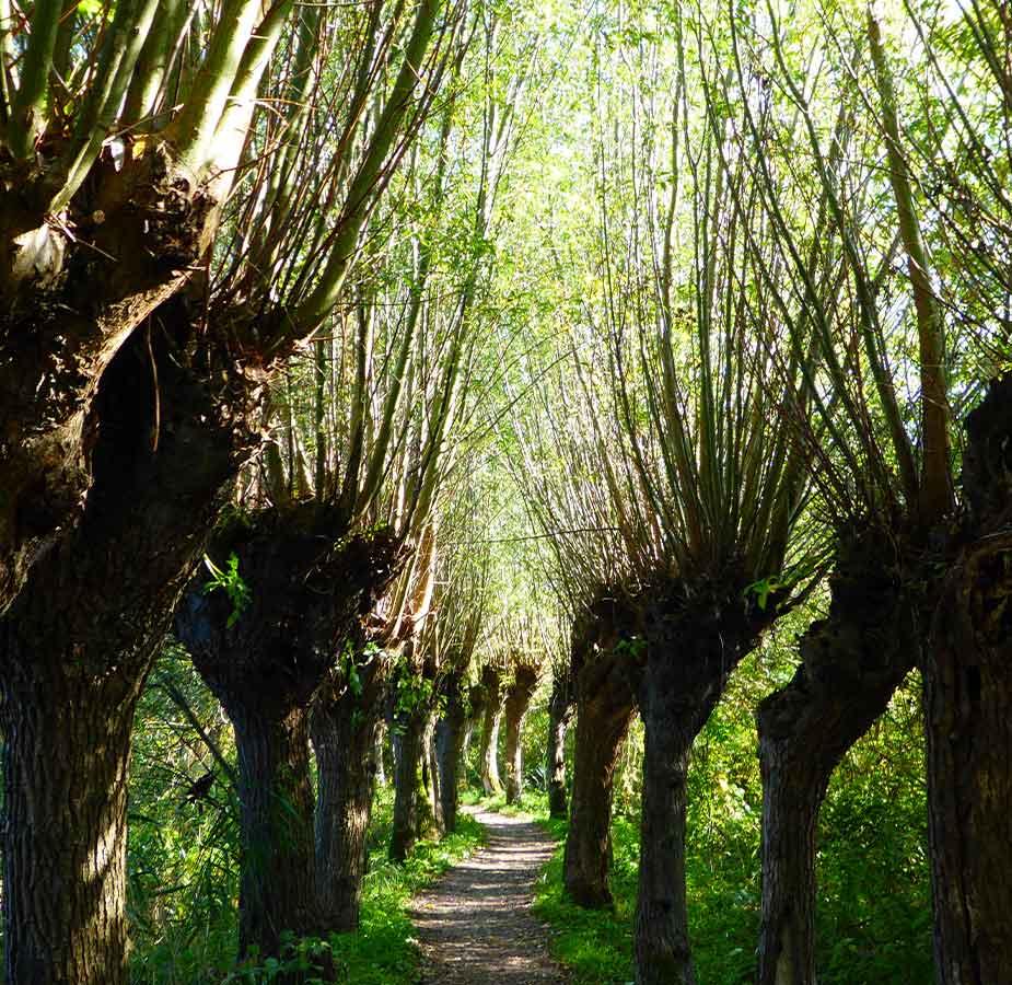 Een bos op IJsselmonde