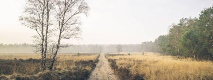 Natuur landschap op de Veluwe