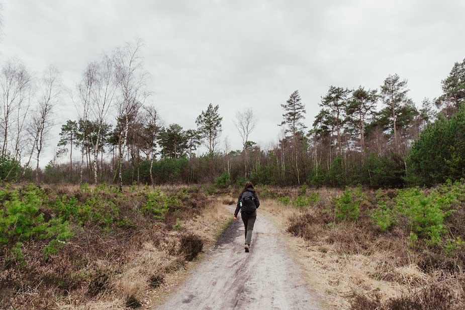 natuur bosbeek nivon
