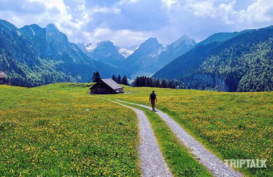 De uitgebreide alpenweiden bij Brulisau Appenzell