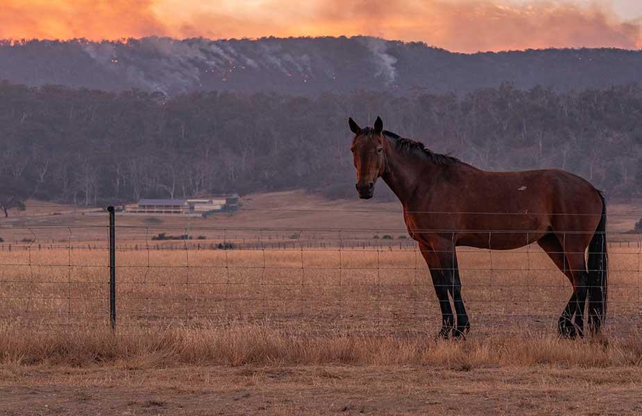 Paard op een vlakte in Tasmanie in Australie
