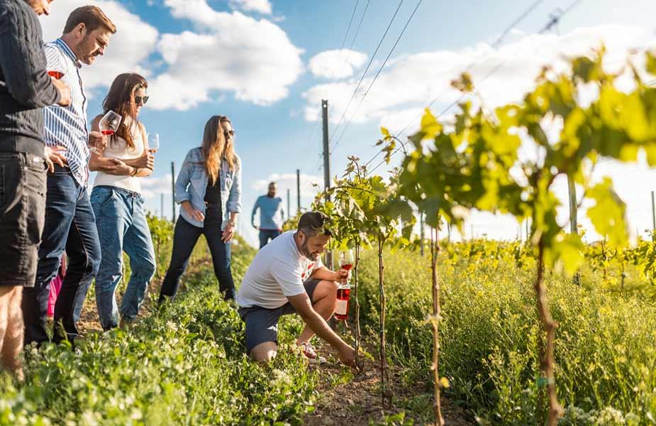 Wijn proeven in de wijngaarden van Tsjechie